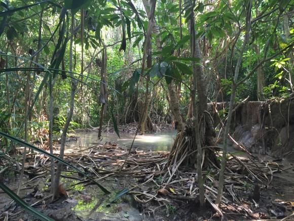 The jungle terrain of Erawan